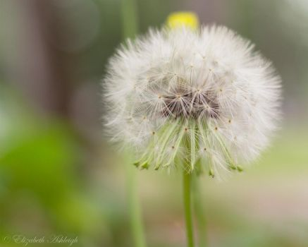 Make A Wish by elizabeth-ashleigh