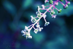 Pretty Little Things by bmjewell