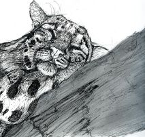 clouded leopard by CBrengan