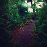 Forest Path by michaelendow