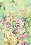 Large tree nymph butterfly by AldemButcher