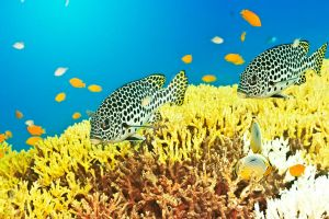 Sweetlips by MotHaiBaPhoto