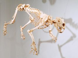 Lion Articulation side view by Meddling-With-Nature