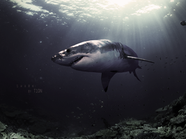 Shark! by t1on