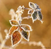 frosted leaves in the morning sun by RachaelXIII