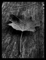 all the leaves have left by thelastring