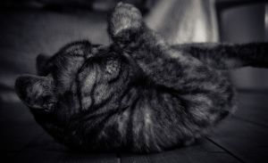 lazy by buschermoehle-photo