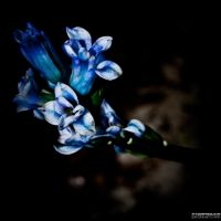 Still blue by BenoitJWild