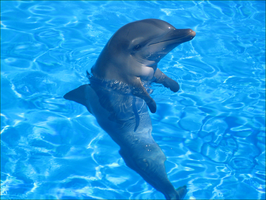 A Dophin Is A Mammal by Frances23