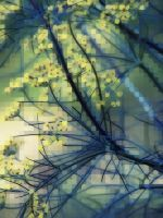 Fennel Dreamscape by MadGardens