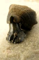Sea Snail?... by youngbeth