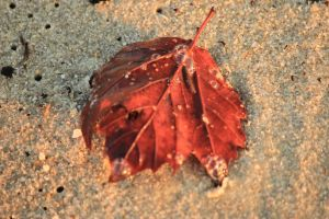 Transitions as Seasons change mix and mingle by Laur720