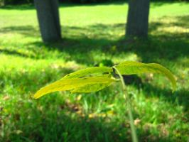 stick of leaves 10 by ElleStock
