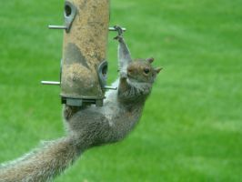 Hungry Squirrel by BrutalityBob
