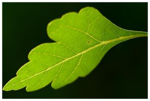 Leaf Detail by madrush08