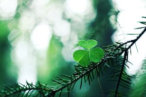 Green III by ElyneNoir