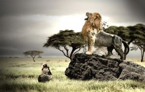Lion King by nicolsche