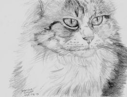 Another cat by BakGuiy