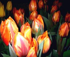 TIPTOE THROUGH THESE TULIPS by Sugaree-33