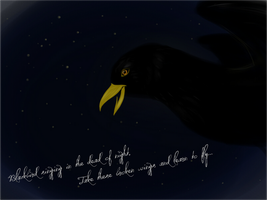 Blackbird by the-mandee-x
