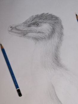 1/2 Scale Velociraptor mongoliensis WIP by LazerWhale