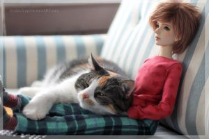 Cat Magnet by RodianAngel