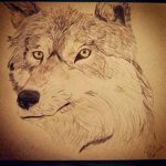 Color Pencil Wolf by maxst5011
