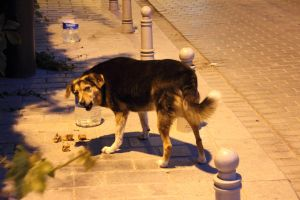 Istanbul 2012 - NIght-dog by Demonescuro