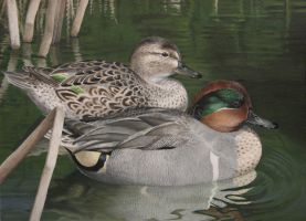 Green-winged Teals by Misted-Dream