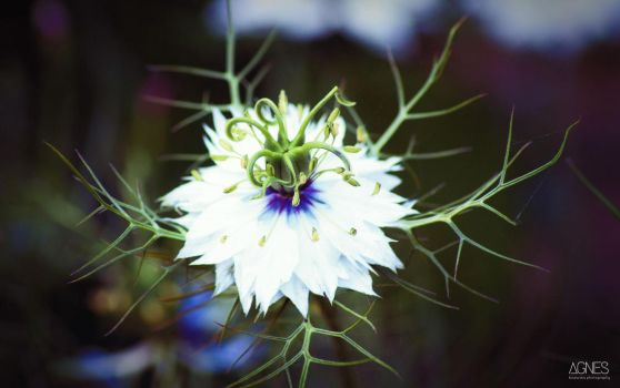 Flower 4 by AgnesBPhoto