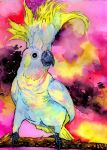 Sulfur-crested Cockatoo Lightness edit by Onyana