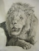 Lion drawing by Sunny22345