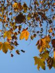 Ginger leaves in the sky by TinyWild