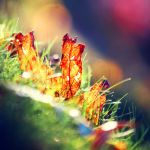 Leaf On The Grass by incolor16