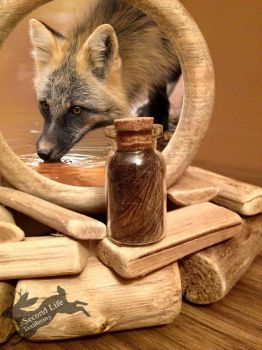 Cross fox fur-bottle FOR SALE *Ethically sourced* by SecondLifeTaxidermy