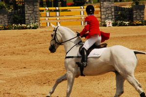 Rolex 08 Show Jumping24 by zeeplease