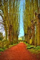 Kenilworth Pathway HDR by AlanSmithers