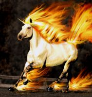 The REAL Rapidash by AnthonyHearsey