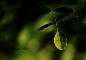.green. by awphotoart