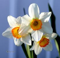 Looks Like Spring by cindy1701d