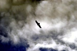 The Vulture Brings Dark Clouds by wagn18