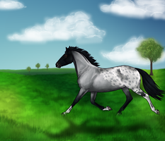 Blue Roan Appaloosa by random-walrus