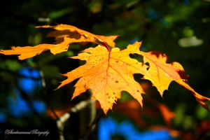 Fall 2013 by starrkravenmad