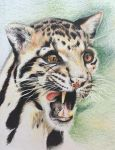 Clouded leopard by forelb