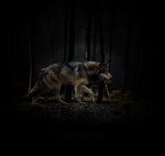 Wolf in forest by Eleawine