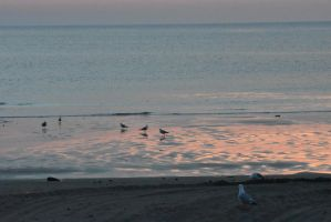 Color Emerging On the Beach, Gulls and Wet Sand by Miss-Tbones