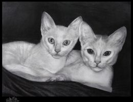 Tail of two kitties by vicariou5