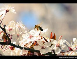 spring bee by Iulian-dA-gallery
