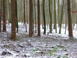 winterforest by mimose-stock