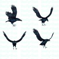 Crow Stock Pack 4 by Shoofly-Stock
